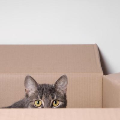 Gato en caja de mudanza